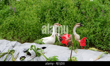 duck in the park - Stock Photo