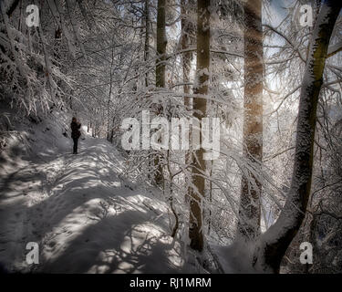 DE - BAVARIA: Wintry woodlands along river Isar at Bad Toelz  (HDR-Image) - Stock Photo