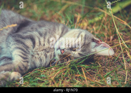 Cute gray cat sleeps outdoors on grass in summer - Stock Photo