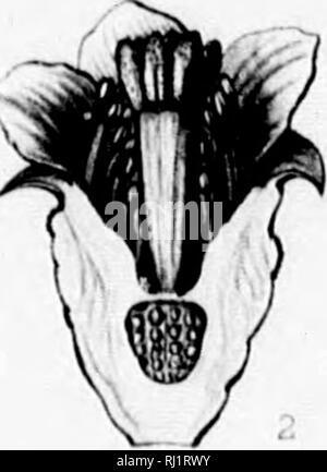 . The silva of North America [microform] : a description of the tree which grow naturally in North America exclusive of Mexico. Trees; Trees; Arbres; Arbres. •N. Please note that these images are extracted from scanned page images that may have been digitally enhanced for readability - coloration and appearance of these illustrations may not perfectly resemble the original work.. Sargent, Charles Sprague, 1841-1897; Faxon, Charles Edward, 1846-1918. Boston; New York : Houghton, Mifflin - Stock Photo