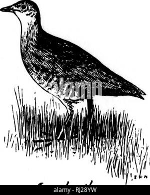 . The natural history of Selborne [microform]. Natural history; Sciences naturelles. T. Xandratl orCorncrake LETTER LV. T!o the same. October loth, 1781. lEAR SIR,—I think I have observed before that much of the most considerable part of the house- martins withdraw from hence about the first week in October; but that some, the latter broods I am now convinced, linger on till towards the middle of that month; and that at times, once perhaps in two or three years, a flight, for one day only, has shown itself in the first week in November.^ Having taken notice in October, 1780, that the last flig - Stock Photo
