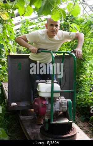 Successful skilled senior farmer working in glasshouse using tools - Stock Photo
