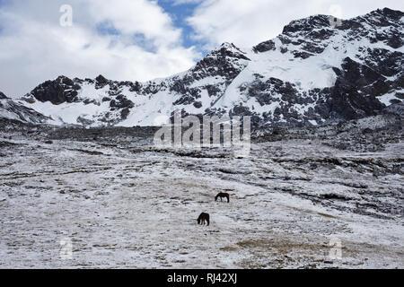 Bolivien, Cordillera Apolobamba, Schnee, Pferde, - Stock Photo