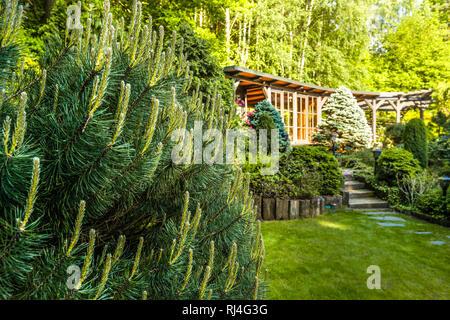 Big pine in the summer garden - Stock Photo