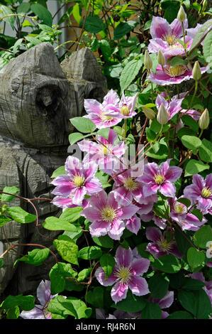 Rosa bl?hende Clematis, Sorte 'Piilu', Kletterpflanze, Bl?ten, Gartenfigur, Eule aus Holz, - Stock Photo