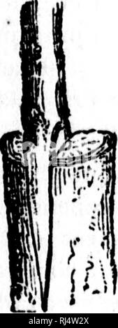 . Le verger, le potager et le parterre dans la province de Québec ou Culture raisonnée des fruits, légumes et fleurs qui peuvent réussir sous le climat de Québec [microforme]. Horticulture fruitière; Horticulture potagère; Fleurs; Fruit-culture; Vegetable gardening; Flowers. . Please note that these images are extracted from scanned page images that may have been digitally enhanced for readability - coloration and appearance of these illustrations may not perfectly resemble the original work.. Provancher, L. , 1820-1892. Québec : C. Darveau - Stock Photo