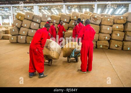 Sacks of dried tobacco leaves in a hall and local workers on a Tobacco auction, Lilongwe, Malawi - Stock Photo