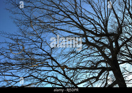 A tangle of branches from winter trees hibernating in winter set against the sky. - Stock Photo