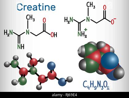 Creatine molecule. Structural chemical formula and molecule model. Vector illustration - Stock Photo