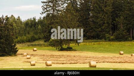 Heuernte in Bayern, Landwirtschaft und Waldwirtschaft, - Stock Photo