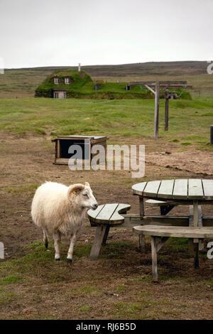Haus, Garten, Schafbock, Saenautasel, Island, Landschaft - Stock Photo