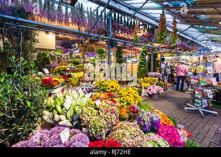 Niederlande, Amsterdam, Innenstadt, Blumenmarkt an der Singel, Markt, Drijvende bloemenmarkt, Bloemenmarkt, Blumen, Blumenverkauf, Blumenhändler - Stock Photo