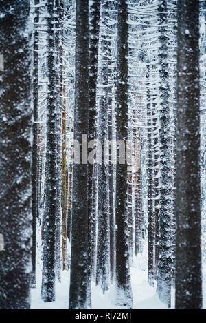 Blick in den Winterwald, Harz, Schierke, Deutschland - Stock Photo