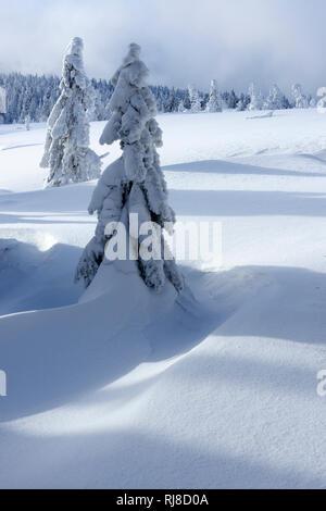 Deutschland, Sachsen-Anhalt, Nationalpark Harz, Fichten mit Schnee, tief verschneite Landschaft im Winter, Wildnis - Stock Photo