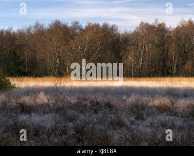 Deutschland, Bayern, Naturpark Bayrische Rhön, UNESCO-Biosphärenreservat, Naturschutzgebiet Schwarzes Moor, Birken und Moorgräser