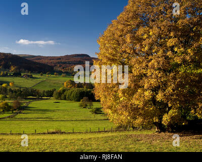 Deutschland, Hessen, Naturpark Hessische Rhön, UNESCO-Biosphärenreservat, herbstbunter Ahorn im oberen Ulstertal bei Wüstensachsen - Stock Photo