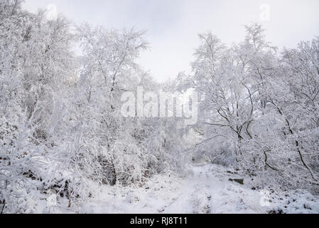 Winter wonderland in an English woodland. Snow covered trees on the path to moors at Tintwistle, Derbyshire, England. - Stock Photo
