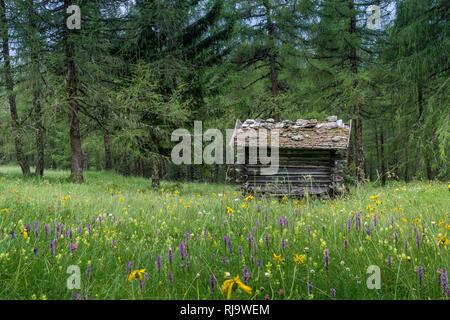 Österreich, Tirol, Stubaier Alpen, Neustift, Heustadl in den Eulenwiesen im Sommer - Stock Photo