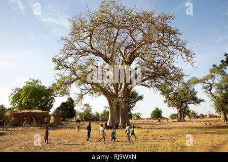Baribsi village, Yako, Burkina Faso, 30th November 2016; Children playing in front of the village baobab tree, used for village meetings. - Stock Photo