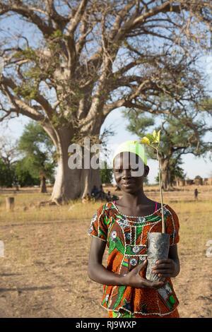 Baribsi village, Yako, Burkina Faso, 30th November 2016; Brigitte Kientega, 15 with a boabab sapling in front of the village baobab tree. - Stock Photo