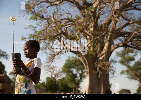 Baribsi village, Yako, Burkina Faso, 30th November 2016; Yvette Sama, 12, with a boabab sapling in front of the village baobab tree. - Stock Photo