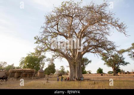 Baribsi village, Yako, Burkina Faso, 30th November 2016; The village baobab tree. - Stock Photo