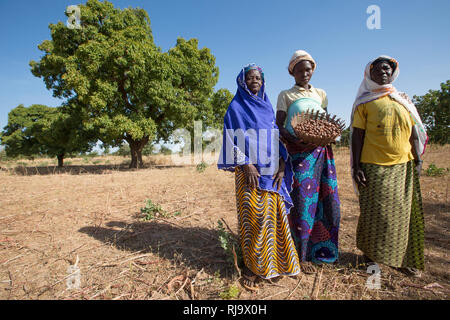 Yarsi village, Yako, 1st December 2016; (Left  to Right) Rasmata Simpone, 60, Leontine Ouedraogo, 31, and Bintou Sankana, 50, all members of the Village Tree Enterprise Shea Group, with shea nuts in front of a shea tree where they collect a large quantity of shea nuts. - Stock Photo