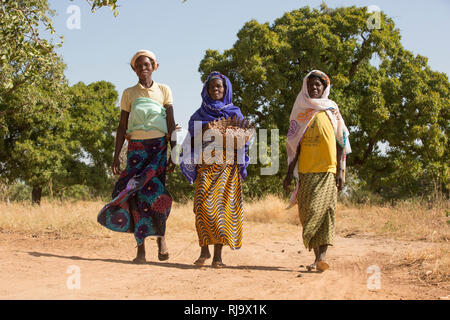 Yarsi village, Yako, 1st December 2016; (Left  to Right) Leontine Ouedraogo, 31, Rasmata Simpone, 60,  and Bintou Sankana, 50, all members of the Village Tree Enterprise Shea Group, with shea nuts in front of a shea tree where they collect a large quantity of shea nuts. - Stock Photo