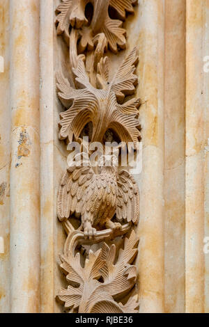 The owl carved in stone on the Salamanca Cathedral facade , the sculpture was added during the renovations in 1992. - Stock Photo