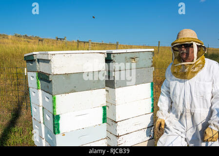 Beekeeper standing next to beehives in a bee yard near Buffalo, Wyoming - Stock Photo