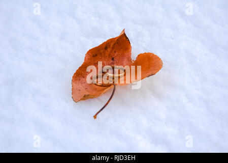 Two gold wedding rings sitting inside a autumnal coloured leaf with a fresh snow background. - Stock Photo