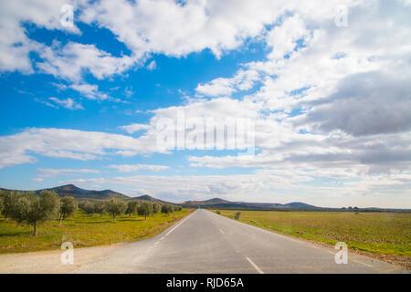 Byway and olive grove. Fuente El Fresno, Ciudad Real province, Castilla La Mancha, Spain. - Stock Photo