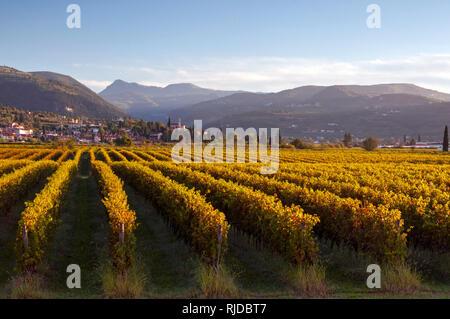 Sunrise view across vineyards from Dimora del Bugiardo, near San Pietro in Cariano, Italy - Stock Photo