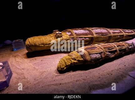 Crocodile mummies on display in the museum in the Temple of Kom Ombo, Temple of Sobek, a double temple from the Ptolomeic dynasty, Upper Egypt - Stock Photo