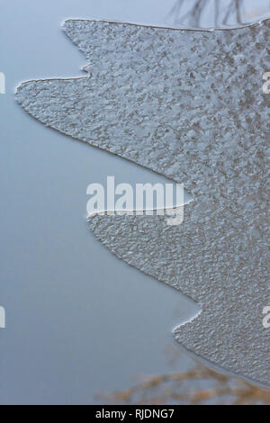 Close up of thin floating ice formation on surface of a winter pond, Castle Rock Colorado US. Photo taken in February. - Stock Photo