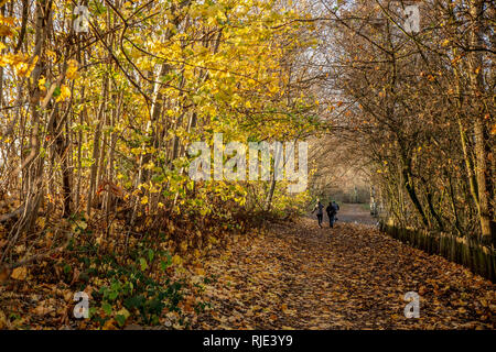 November 2018 : Chorlton Water Park in full autumn colours on a sunny afternoon.  Pathways are heavily covered in golden coloured leaves. - Stock Photo