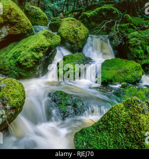 Falls, Cataract Canyon, Mount Tamalpais, Marin County, California - Stock Photo