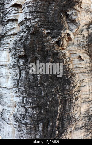 This fluid wood seems  black river..... But it is just a trunk. Still the nerves and colors are really suggesting. - Stock Photo