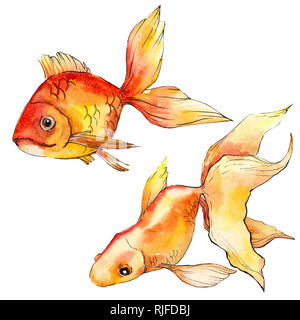 Watercolor aquatic underwater colorful tropical goldfish set. Red sea and exotic fishes inside. Background illustration set. Watercolour drawing fashi - Stock Photo