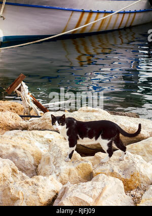 Black and white cat on stones near sea and boat in dock. - Stock Photo
