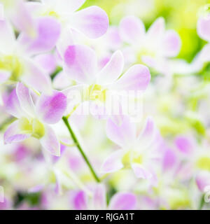 Beautiful pale pink orchid flowers in tropical garden - Stock Photo