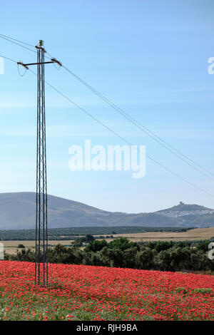 Electricity pylon in field of Red Poppies, Papaver rhoeas, and Common Daisies, Bellis perennis with Teba Castle in background. - Stock Photo