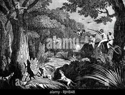 An engraving depicting a leopard hiding from hunters who are using dogs and an elephant, India. Dated 19th century - Stock Photo