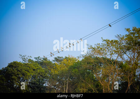 Flock of migrating Sparrow Birds sitting on a wire against the blue sky. Beautiful countryside rural summer landscape of a rural Indian village. - Stock Photo