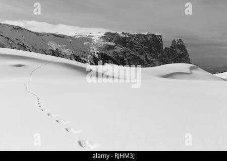 Winter season. Alpe di Siusi mountain plateau. Sciliar peaks. Hare footprints on snow. The Gardena Dolomites in winter season. Italian Alps. Europe. - Stock Photo