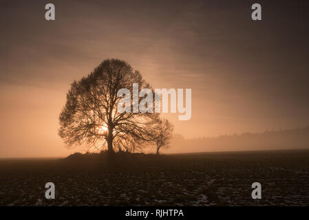 Linden tree at foggy sunset. Mystery sunset in the foothills of the Giant Mountains, Czech Republic. - Stock Photo