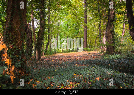 A forest with Ivy in shadows - Stock Photo
