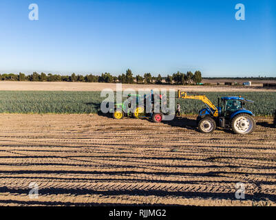A tractor harvests leeks in the portuguese countryside - Stock Photo
