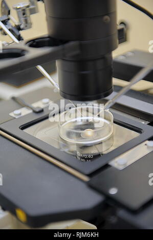 Laboratory Microscope isolated. Scientific and healthcare research - Stock Photo
