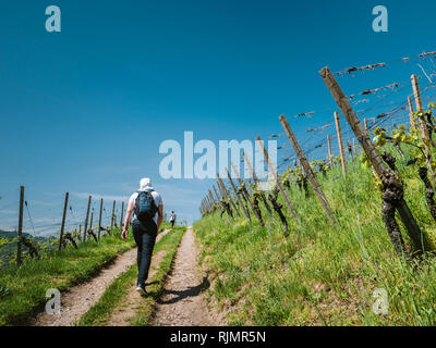 Rear view of unrecognizable man with backpack walking up rural road among green grape plantations in sunlight vineyard discovering the German vineyard in summer day - Stock Photo